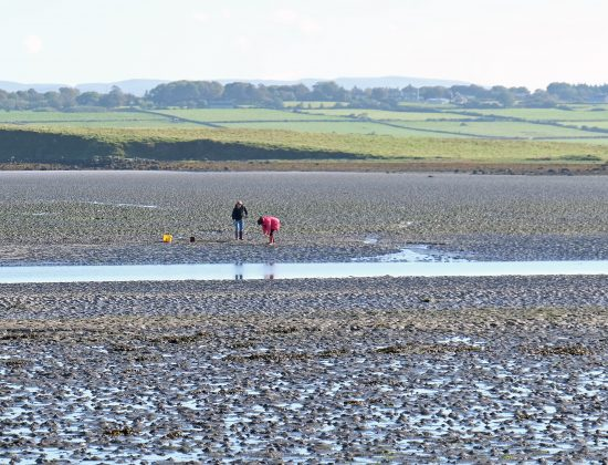 Picking Cockles and Mussels in Mayo